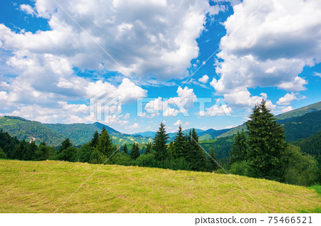 summer landscape in carpathian mountains. beautiful nature scenery with trees on the grassy meadow. fluffy clouds on the bright blue sky. wonderful travel destination of ukraine 75466521