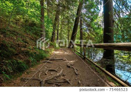 trail through forest in summertime. trees an fence along the path. roots stick from the ground. nature travel concept, explore the wilderness 75466523