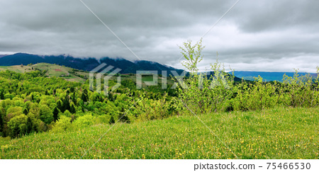 mountainous countryside scenery in spring. trees and grass on hills rolling through the green valley in to the distant ridge on a cloudy day 75466530