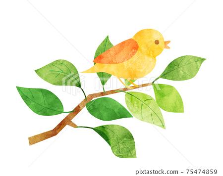 葉37新鮮綠色綠色分支鳥小鳥水彩風格 75474859
