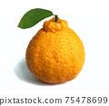Dekopon Japanese citrus on white background. 75478699