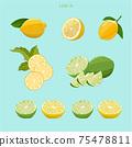 手繪檸檬插畫矢量圖 75478811