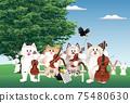 貓,小提琴和大提琴 75480630