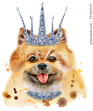 Watercolor portrait of dog pomeranian spitz with silver crown 75489345