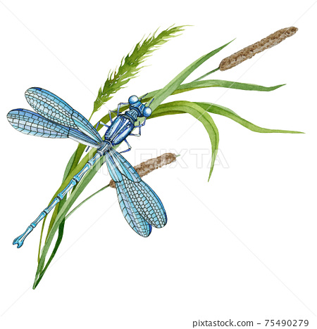 Dragonfly on green grass. Hand drawn watercolor illustration. Elegant insect and wild meadow herbs. Blue dragonfly and grass spikelets 75490279