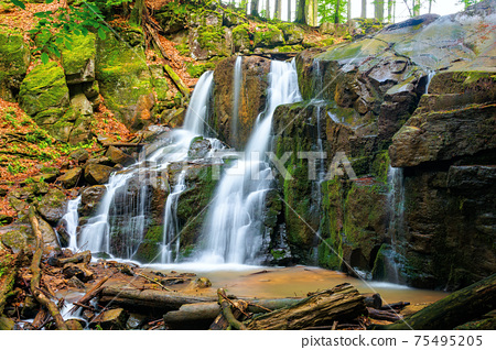 wild waterfall skakalo in spring. scenic travel destination of mukachevo region transcarpathia, ukraine. cold water fall out of the rock. concept of beauty and freshness in nature 75495205