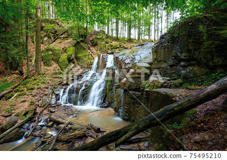 wild waterfall skakalo in spring. scenic travel destination of mukachevo region transcarpathia, ukraine. cold water fall out of the rock. concept of beauty and freshness in nature 75495210