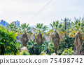 Palm trees and blue sky in the Sochi city, Russia 75498742