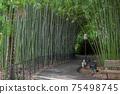 Bamboo grove in the Arboretum park of the Sochi city, Russia 75498745