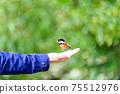 아름다운 새들이 부드러운 손에 머무는 풍경 자연의 조류 신록 이미지 풍경 75512976