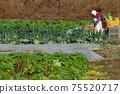 一個收蘿蔔的女人 75520717