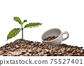 Coffee tree and coffee cup on a pile of coffee beans isolated on white background 75527401