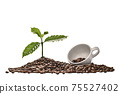 Coffee tree and coffee cup on a pile of coffee beans isolated on white background 75527402