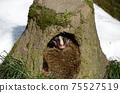 棕櫚麝貓在洞穴Paguma幼蟲中小睡 75527519