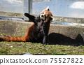 小熊貓小雄貓 75527822