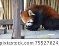 小熊貓小雄貓 75527824