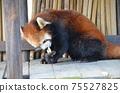 小熊貓小雄貓 75527825