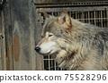 東部狼犬狼瘡lycaon 75528296