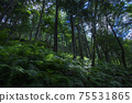 Fern-covered trees 75531865