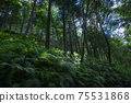 Fern-covered trees 75531868