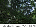 Fern-covered trees 75531870