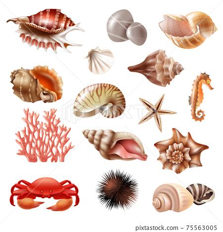 Seashell Realistic Set 75563005