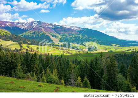 mountain landscape on a sunny day. beautiful alpine countryside scenery with spruce trees. grassy meadow on the hill rolling down in to the distant valley. clouds on the blue sky 75564215