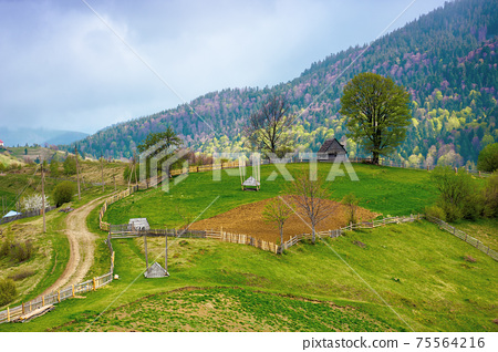rural landscape of carpathian mountains. fields and trees on rolling hills. ukrainian village in countryside. spring scenery in dappled light 75564216