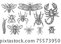 Set of insect sketch. Vintage drawing of bugs 75573950