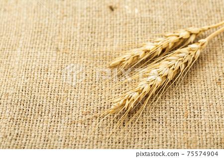 小麥的耳朵 75574904