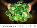 Top view of plant in womns hands 75581135