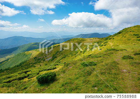 hills of the mountain rolling in to the distance. summer landscape of the black ridge in the eastern carpathians, ukraine. sunny scenery with fluffy clouds on the blue sky 75588988