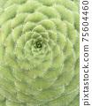 다육식물, 선인장, 75604460