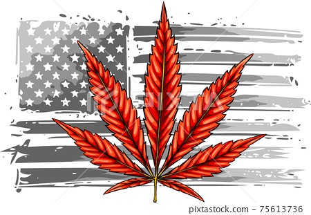 american flag with cannabis leave vector illustration 75613736