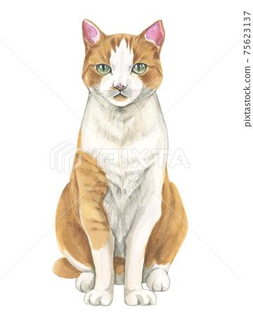 虎斑貓坐著[手繪水彩] 75623137