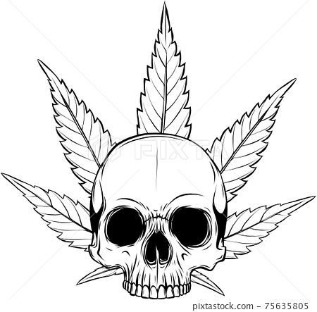 draw in black and white of skull with leaves marijuana head illustration design 75635805