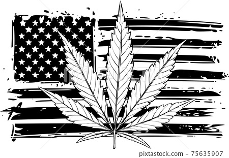 draw in black and white of Illustration of USA flag with a hemp leaf 75635907
