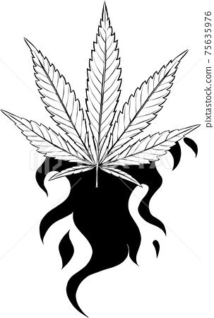 draw in black and white of leaf hemp fiery vector illustration design 75635976