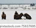 Winter snowy eagle 75637695