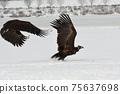 Winter snowy eagle 75637698