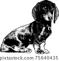 dachshund dog sketch - vector illustration 75640435
