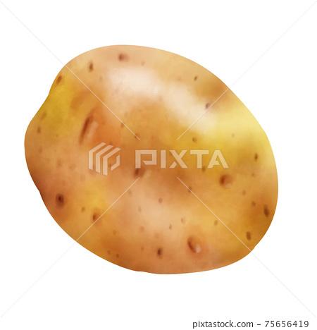 水彩例證土豆 75656419
