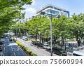 【도쿄】 여름의 녹색이 아름다운 오모테 산도 75660994