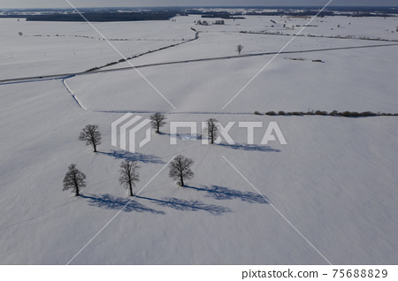 Winter oaks group on snowy field with shadows, aerial 75688829