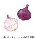 紫洋蔥手繪插圖 75691106
