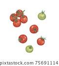櫻桃番茄手繪插圖 75691114