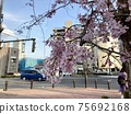 Cherry blossoms in everyday life 75692168