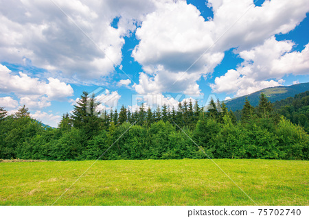 mountainous rural landscape in summertime. trees on the hillside meadow. clouds on the blue sky above the distant ridge. countryside adventures on a sunny day 75702740