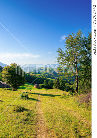 mountainous rural area in the morning. beautiful remote agricultural landscape in summer. trees and grassy fields on rolling hills 75702742