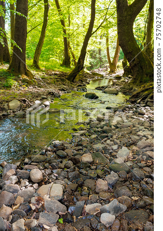 wild water stream in the forest. beautiful nature scenery on a sunny spring day. trees in vivid green foliage. stones on the shore. freshness of nature concept 75702748